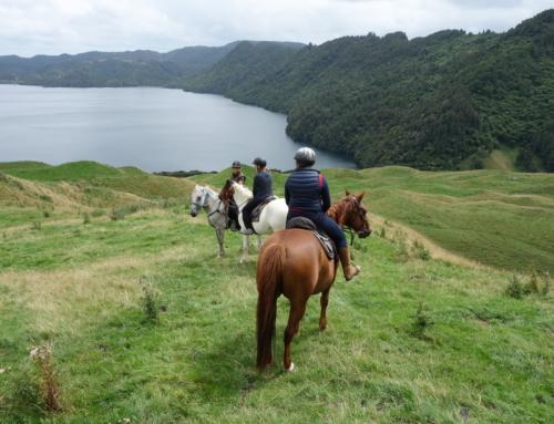 Resten av Rotorua: rida, bada, äta och bo!