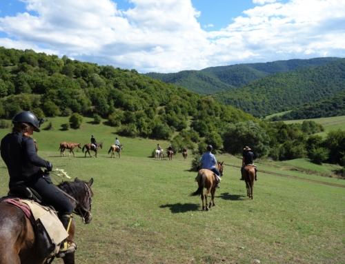 Galopp i Georgien – från ett till hundra på sju dagar