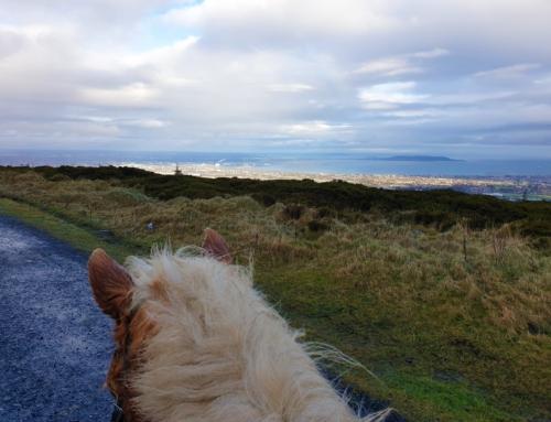 Till häst i Dublin Mountains