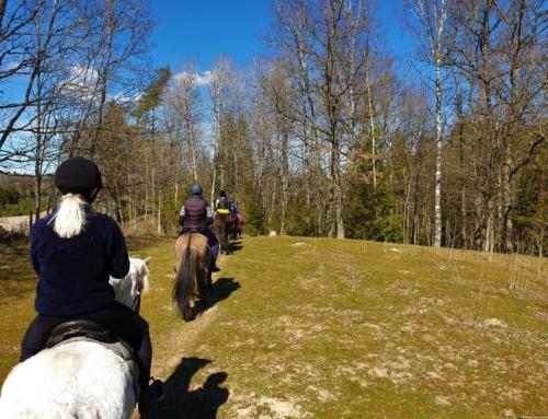 En vårtur med Stålarp Islandshästar