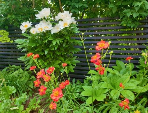 Ett år med min trädgård – juni