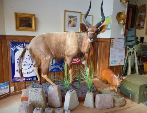 Antik och loppis i Västsverige – bästa ställena för sakletare