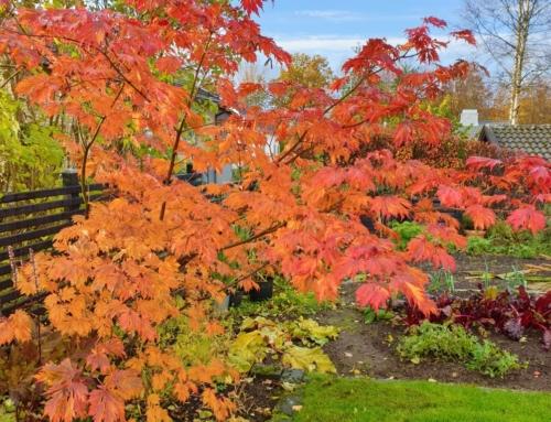 Ett år med min trädgård – oktober