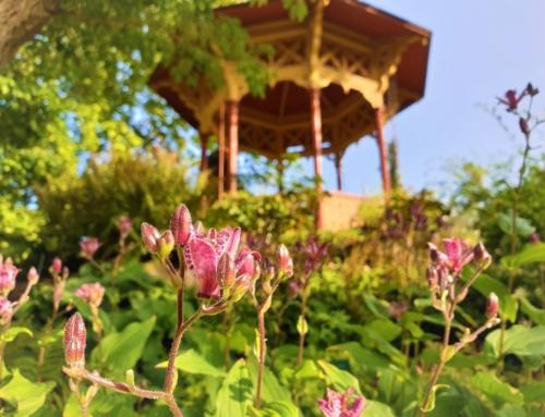 DBW:s Botaniska Trädgård i Visby