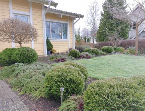 Ett år med min trädgård – november
