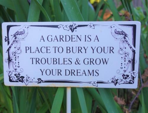 Ett år med min trädgård – december