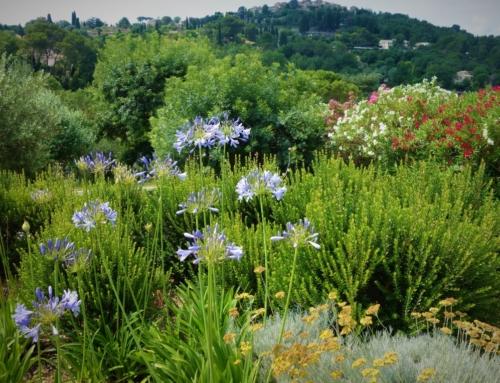 Om min trädgård låg i södra Frankrike…