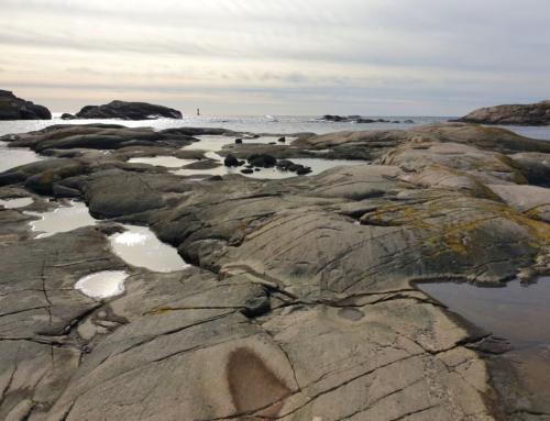 De små äventyrens tid – Tjurpannan, naturreservat i Bohuslän