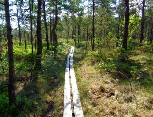 Ut och vandra! Store Mosse nationalpark