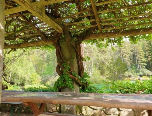 Vargaslätten – trädgården som konstverk